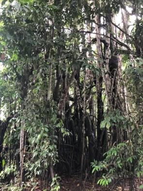 durch den Dschungel...