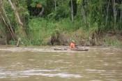 Amazonas Stilleben