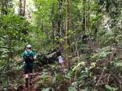 Auf in den Dschungel ...
