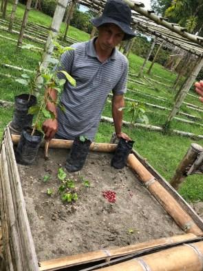 Aurelio erklärt das Wachstum des Kaffeebaums, von der Bohne zum Setzling.