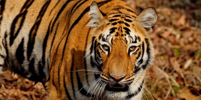 My Wild India