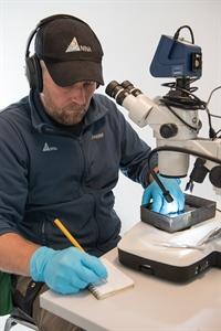 Kjetil Olstad (NINA) sjekker gyroinfeksjonen på laksunger før doseringsstart. Foto: Anders Gjørwad Hagen/NIVA.