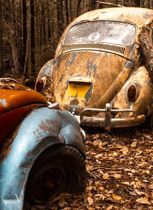 Nina-Marquardsen-Fotografi-Beetle-5512_thumb