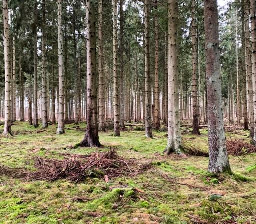 Billeder fra skoven og grundtræt Mor
