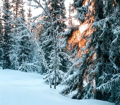 Skitur til sverige i sol og sne