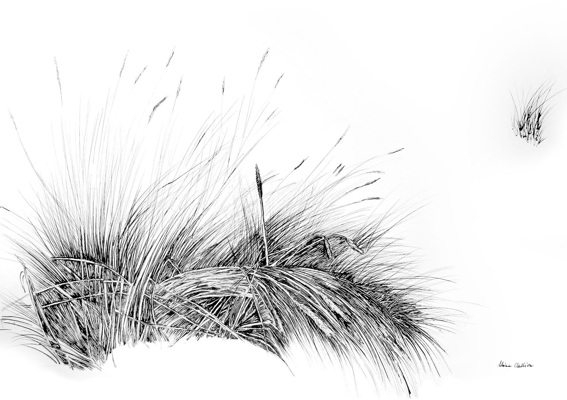 Dune Grasses 1 Nina Vallion Fine Art