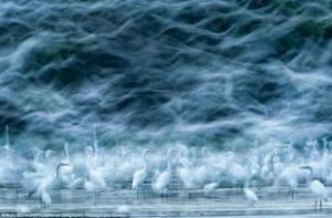 aironi-bianchi-danubio