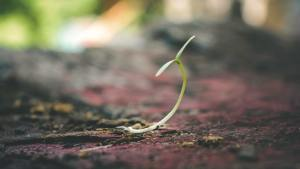 a small sprout on the ground