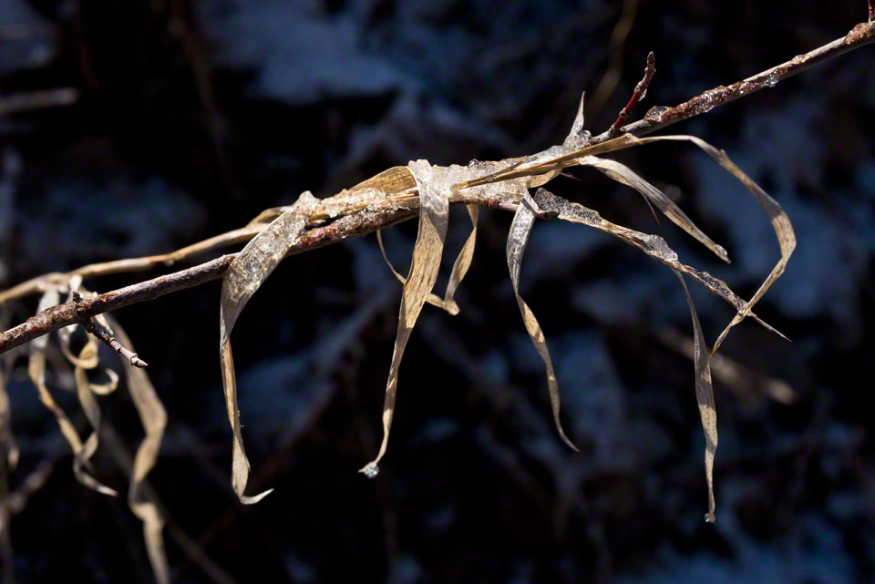 Ice on Dead Grass and Twigs - 2