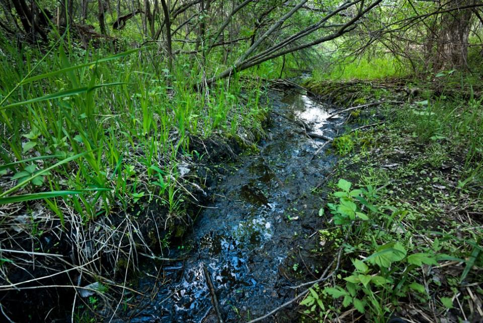 Rainwater Runoff in the West Draw