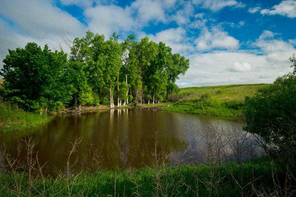Big-Pond---Full