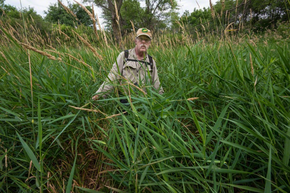 Yours Truly in the Deep Draw Grass