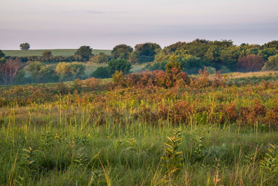 A Humid Mid-August Prairie Vista