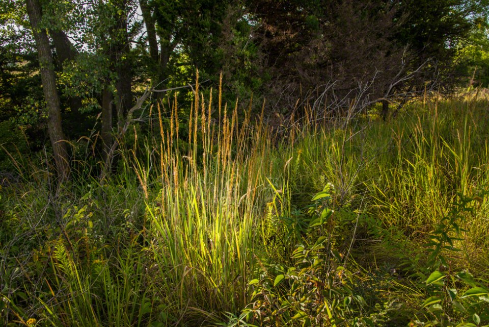 A Lightstruck Patch of Grass on the Edge of the Little Draw