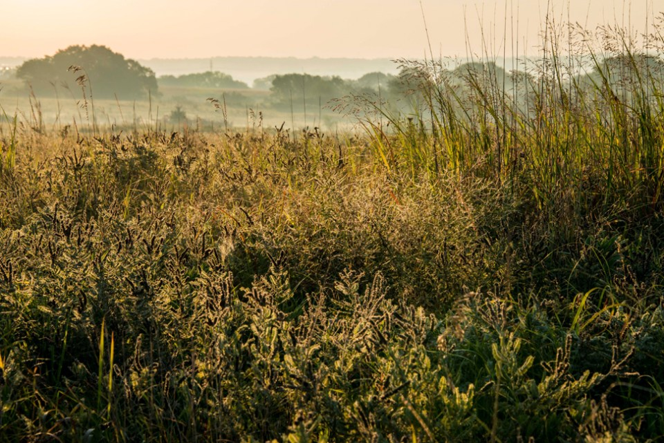 Chest Deep in Prairie Vegetation and Humidity
