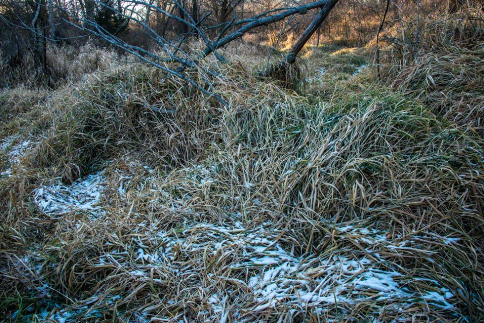 A Little Dusting of Snow on a Hummock of Marshy Grass