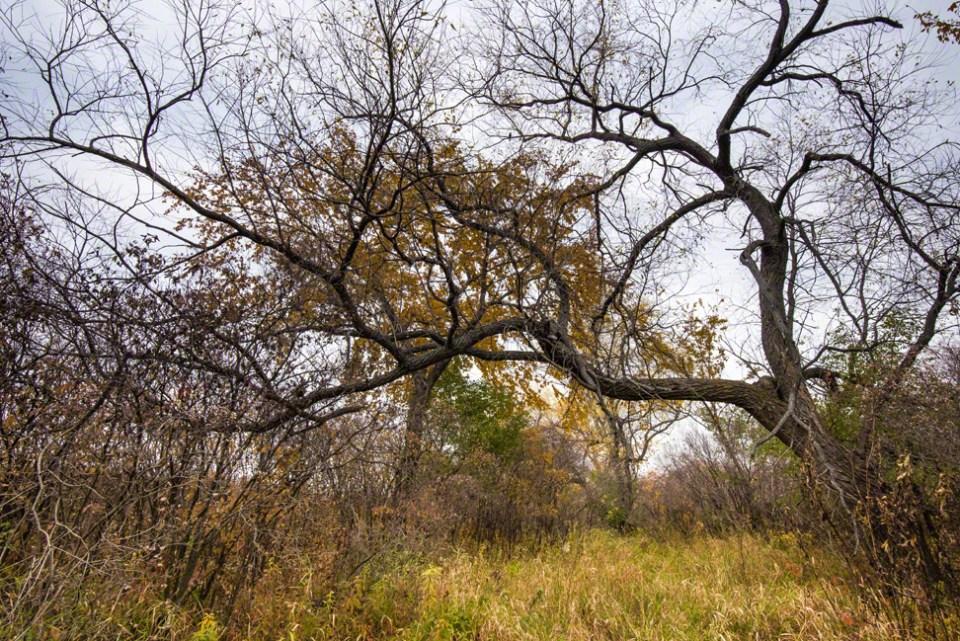 Bare Trees Like Veins