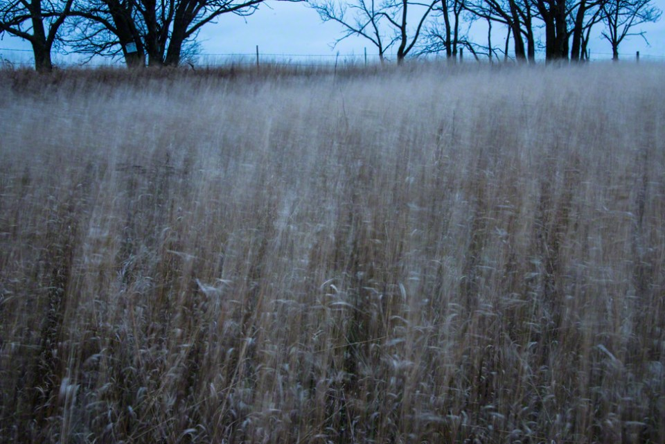 Breezy Pre-Dawn Grasses - East Fence
