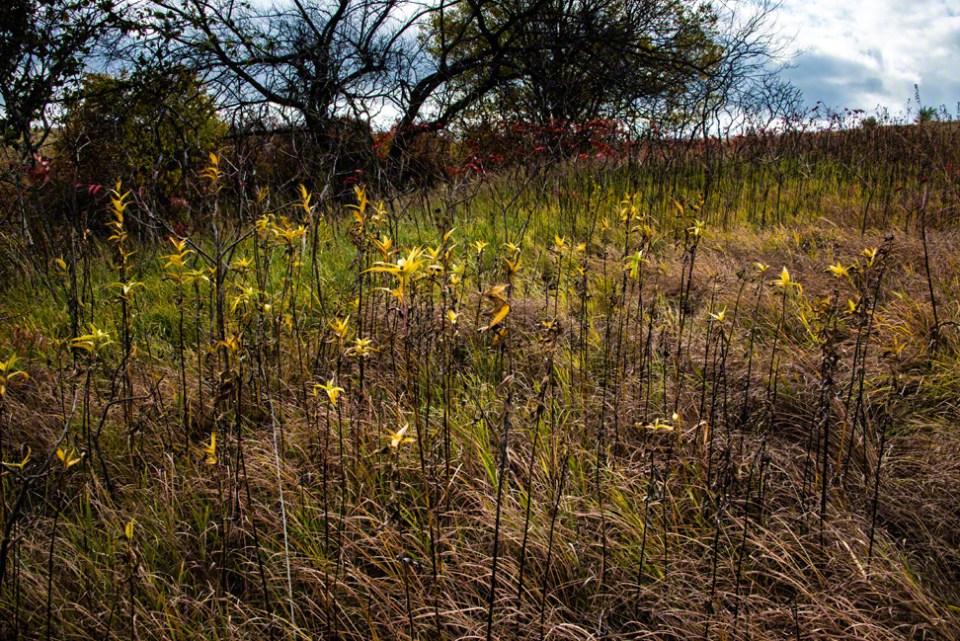 Last Yellow Leaves on Stalks