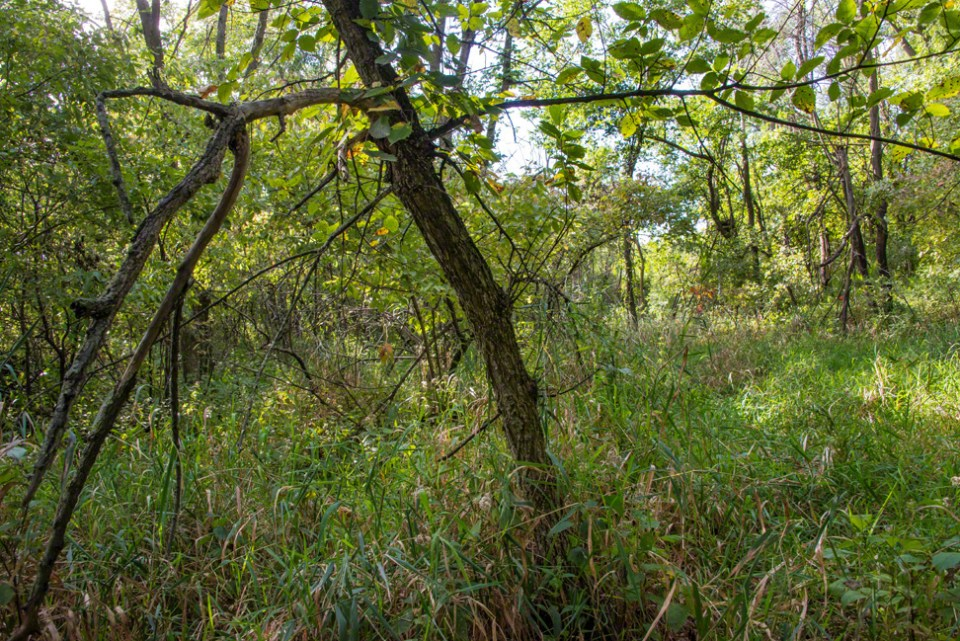 Past a Leaning Sapling into a Clearing
