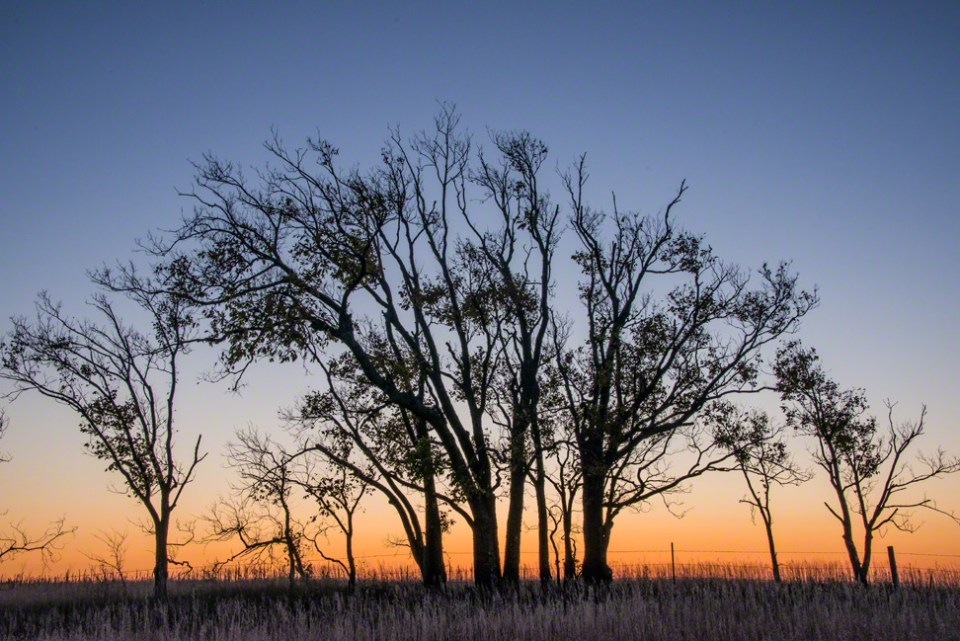 The East Fenceline Tree Clump at Dawn