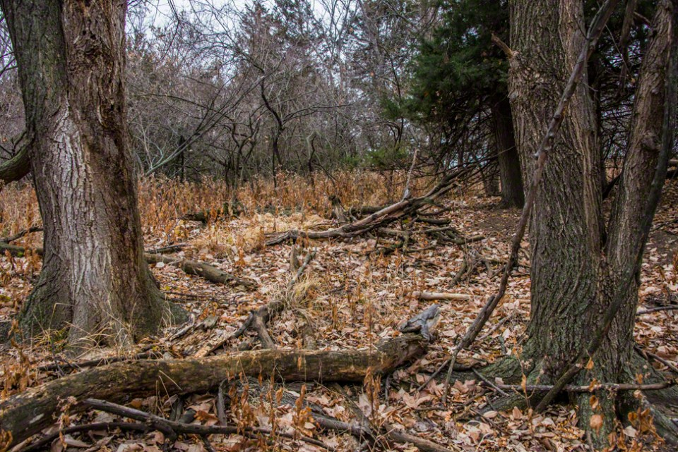 A Clearing Where a Big Tree Dropped Limbs
