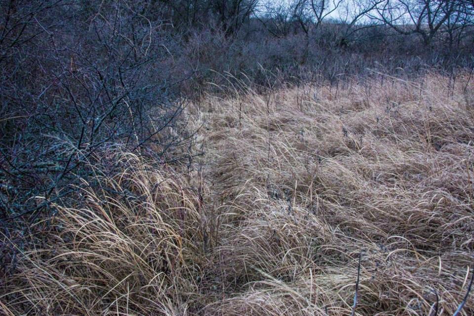 Grass Meets Bush Edge Wide