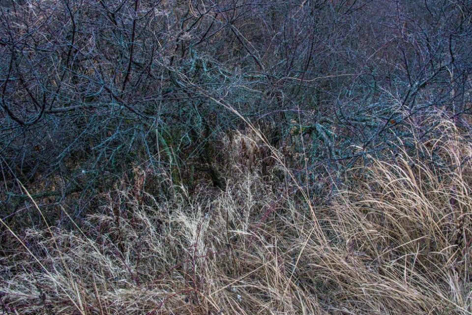Grass Meets Bush Edge