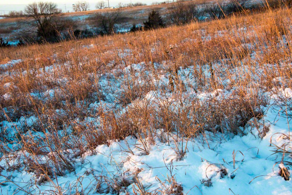 Grass and Snow on the First Hillside