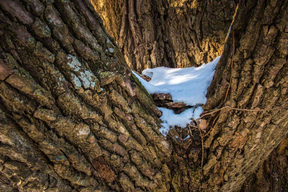 Snow in the Crotch of the Big Boy Cottonwood