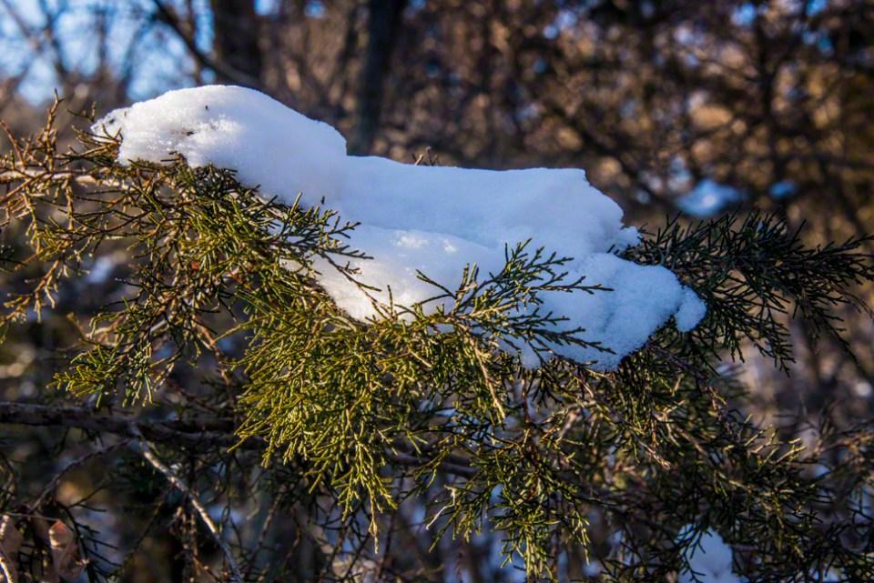 Snow on a Bough