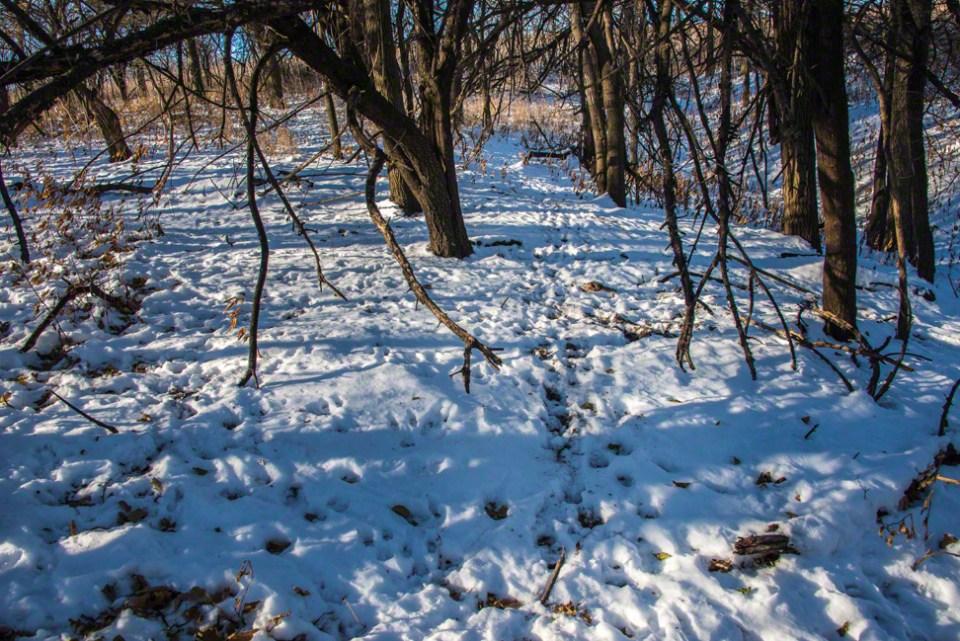 Snowy Game Trail in Deer Park