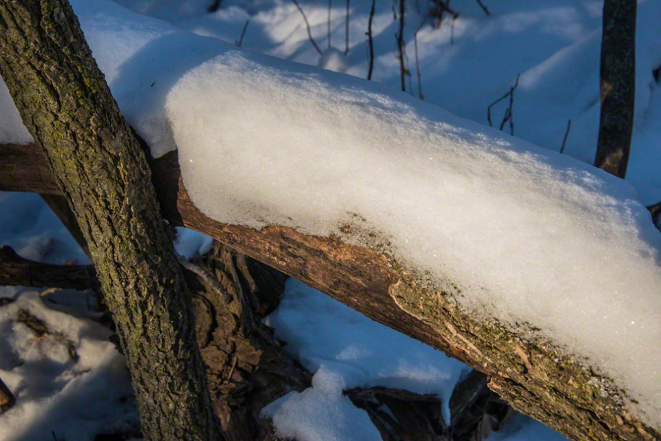 Sunlight Goes To Work on a Snow Covered Down Tree