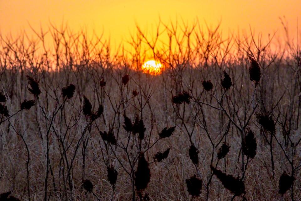 Sunrise Through Sumac