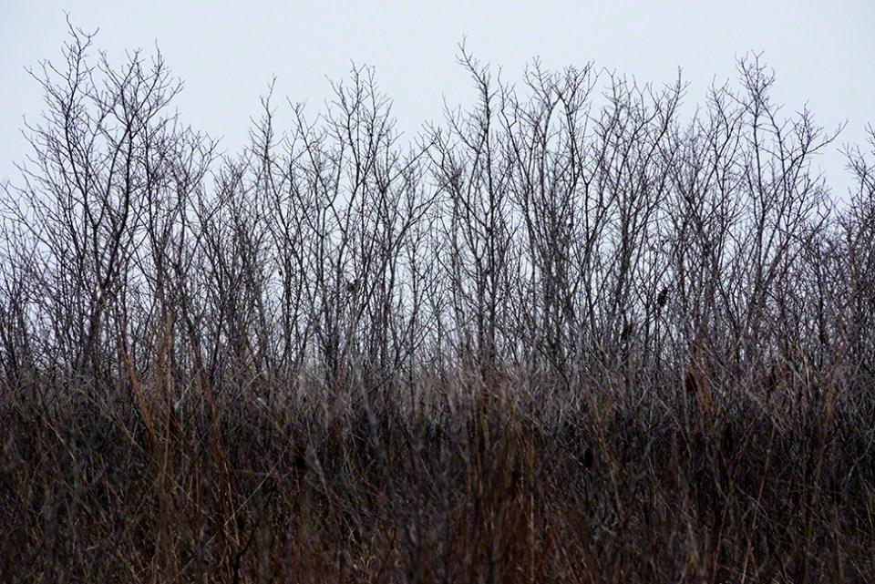 Black Shrubs Against Gray Sky