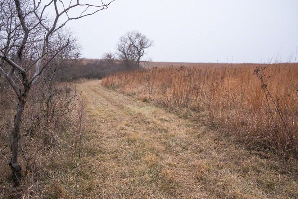 Sunday Morning Fog 14 - The Path