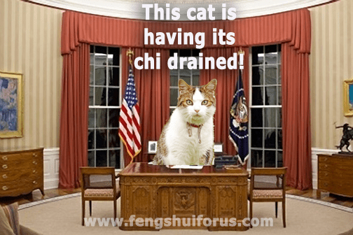 president-cat-2