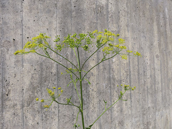 flowers2013_21