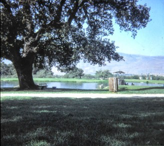 Horshat Tal, nearby park.