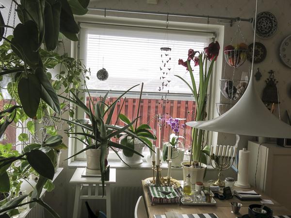 kitchenwindows, greenery