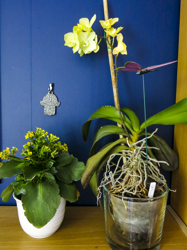yellow orchid,