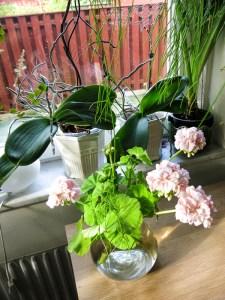 plantsandflowers