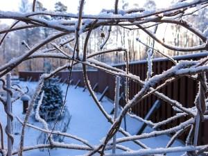winter, snow