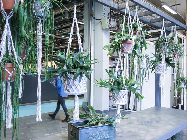 Hanging plants.