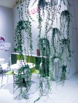 Room divider by haning plants