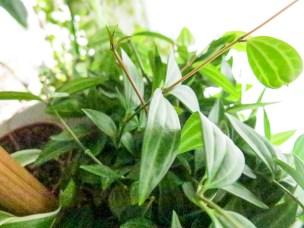 plant_10