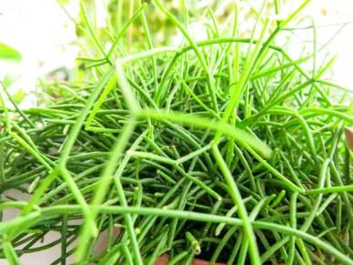plant_12