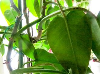 plant_15