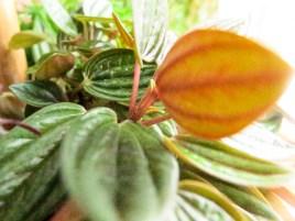 plant_8