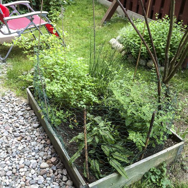 veggiebox, garden, greenery